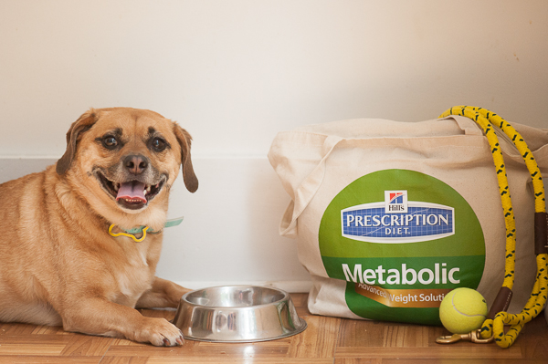 © Daily Dog Tag | Puggle and Hill's Prescription-Diet, ball and  yellow leash