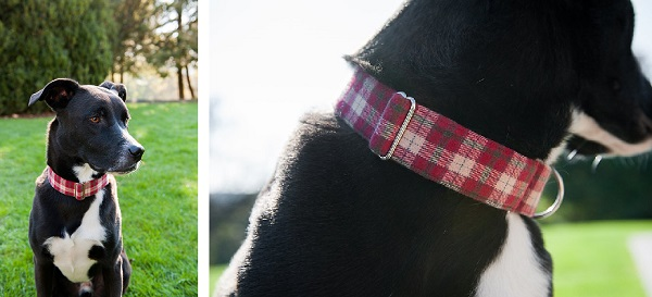 © Jenny Karlsson Photography | Daily Dog Tag | Scout Dog Collar