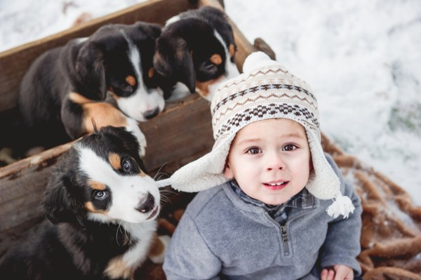 © Custom by Nicole Photography | Daily Dog Tag | Swiss-Mountain-pup-chewing-toddler's-hat