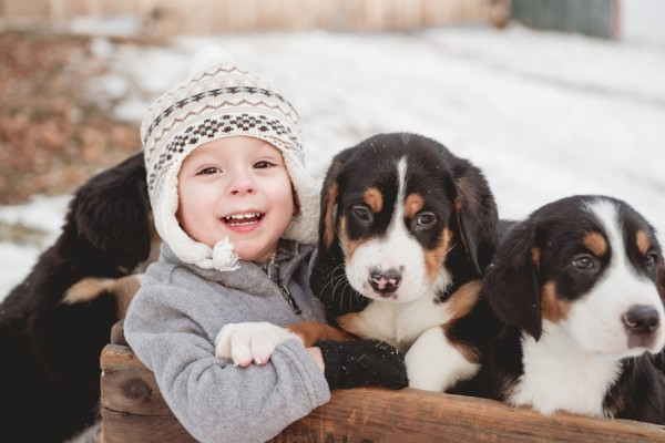 © Custom by Nicole Photography | Daily Dog Tag | Swiss-Mountain-Dog-puppies-and-toddler