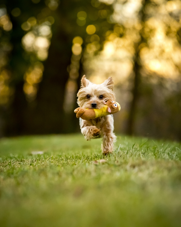 © Right Start Photography | Daily Dog Tag | Chester-County-dog-photography
