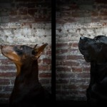 Doberman, Mastiff