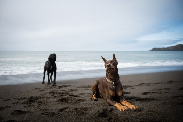 © Frame Your Pet | Daily Dog Tag | Dogs-on-beach, SF-pet-photography