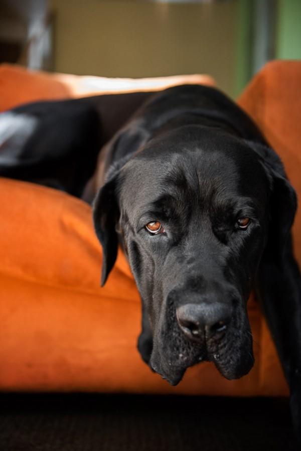 © Frame Your Pet | Daily Dog Tag | Handsome-black-dog-on-orange-furniture