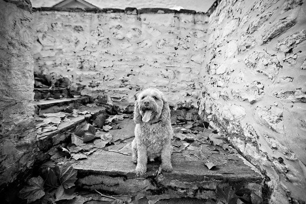 © April Ziegler Photography | Daily Dog Tag | Philadelphia-Pet-Photography, lifestyle-dog-photography, Cockapoo