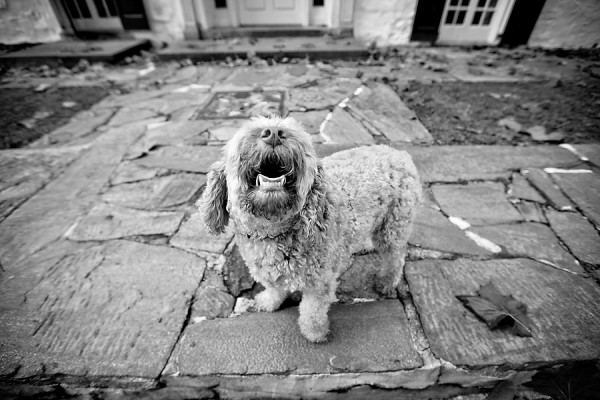 © April Ziegler Photography | Daily Dog Tag | laughing-dog