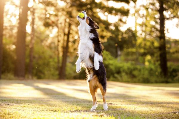 Fetching!