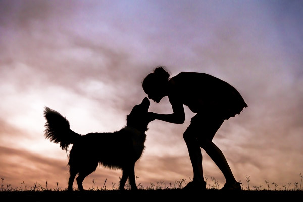 © Charlotte Reeves Photography | Daily Dog Tag | shooting-silhouettes-dog-photography