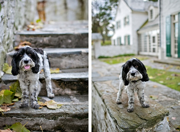 © April Ziegler Photography | Daily Dog Tag | Philly-On-location-dog-photography
