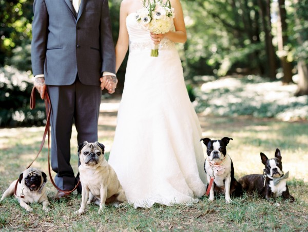 © Sarah Der Photography | Daily Dog Tag | Best-Dogs-Wedding-Portraits