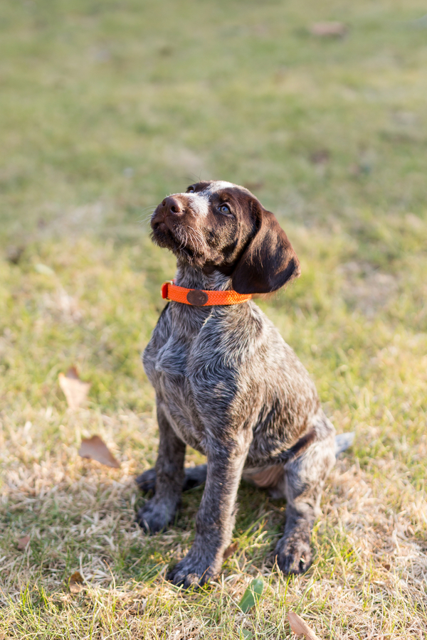 Puppy Love: Gracie - Daily Dog TagDaily Dog Tag