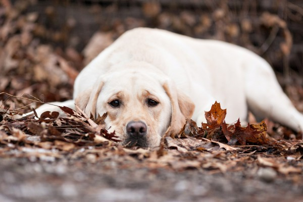 © Paw Prints - Pet Portraits By Charlene | Daily Dog Tag | Pittsburgh-Pet-Photography