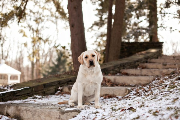 © Paw Prints - Pet Portraits By Charlene | Daily Dog Tag | Pittsburgh-area-pet-photographer