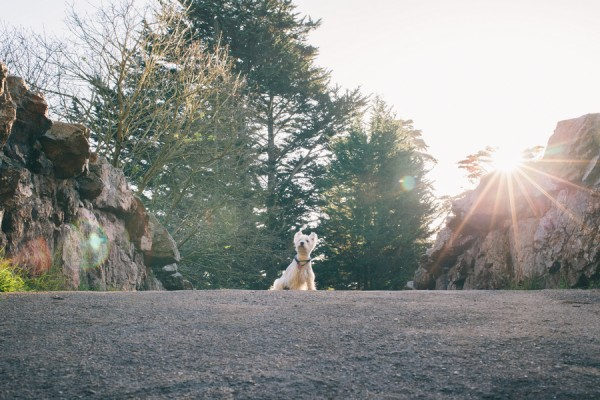 © D Lillian Photography | Daily Dog Tag | SF-lifestyle-dog-photography