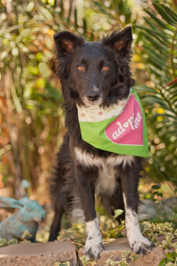 © Fetching  Pet Lifestyle Photography | Daily Dog Tag | Adopt Heidi  from Aussie Rescue of San Diego