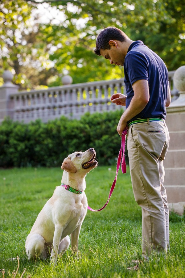 © Kathryn Schauer Photography | Daily Dog Tag | Yellow-Lab, CT-on-location-dog-photographer