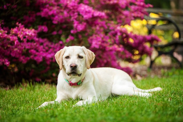 © Kathryn Schauer Photography | Daily Dog Tag | On-location-dog-portraits, spring-dog-photo