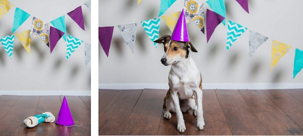 © Joe R Geske Photography | Daily Dog Tag | Dog-in-birthday-hat
