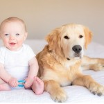 Golden-Retriever-puppy-and-baby