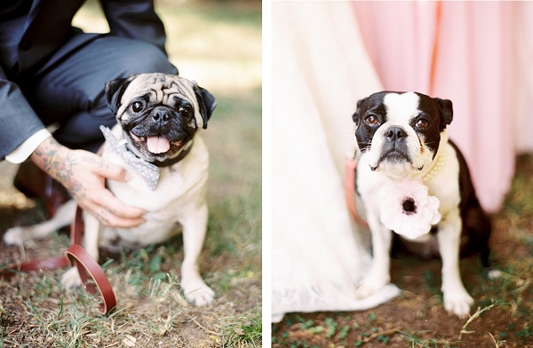 © Sarah Der Photography | Daily Dog Tag | Best-Dogs-Wedding