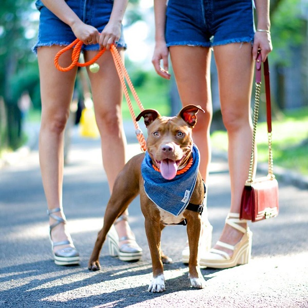 © The Dogist | Daily Dog Tag | Adoptable-Pit-Bull-from-The-Bully-Project