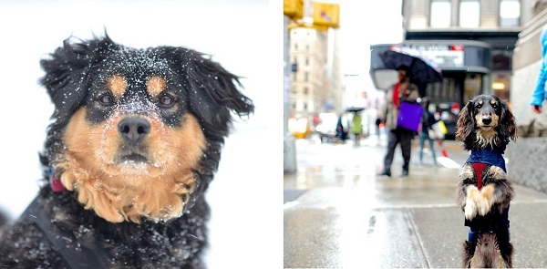 © The Dogist | Daily Dog Tag | NYC-dog-photography