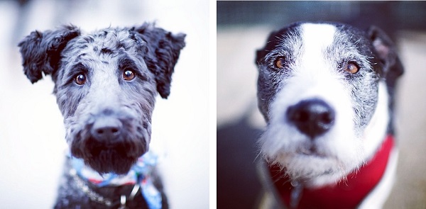 © The Dogist | Daily Dog Tag | Kerry-Blue-Terrier, Hound-mix