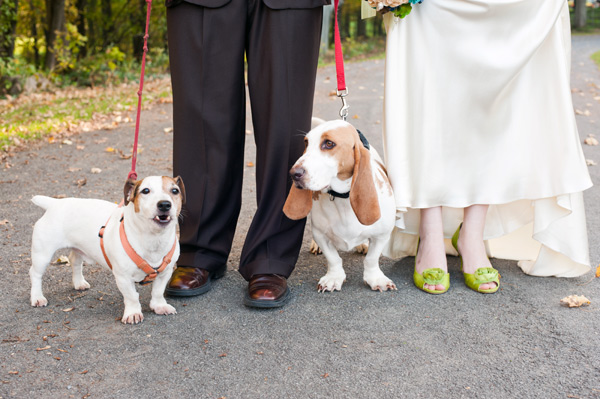 © Alice G Patterson Photography | Daily Dog Tag | wedding-dogs, #JRT, #Basset-hound