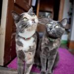 lifestyle-cat-photographer