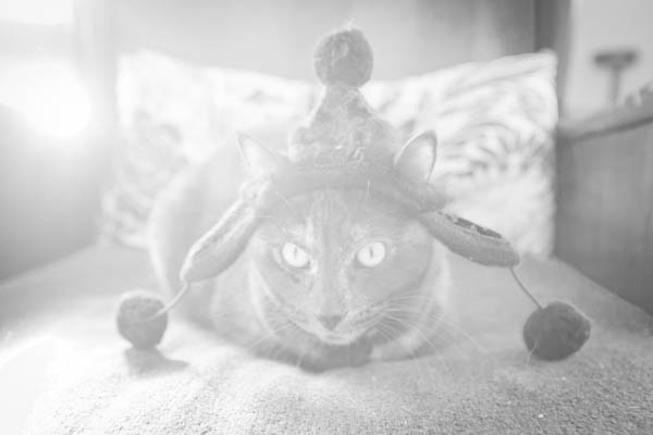 © Chocolate Moose Images | Daily Dog Tag | on-location-cat-photography