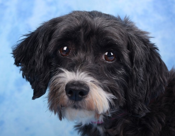 Adoptable-Dog-from-National-Mill-Dog-Rescue