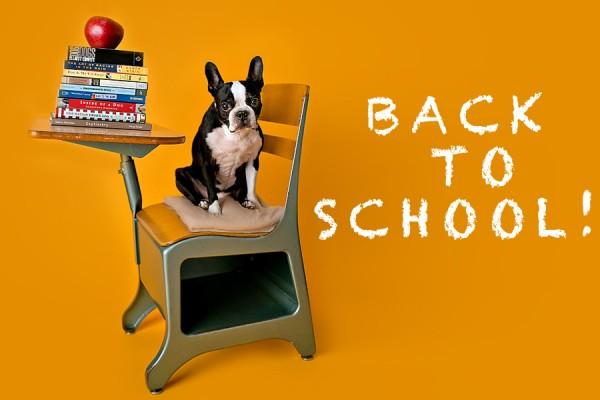 © April Ziegler Photography | Daily Dog Tag | Back-to-School-Boston-Terrier