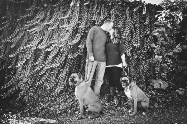 © Origin Photo | Daily Dog Tag | Boxers-in-engagement-session