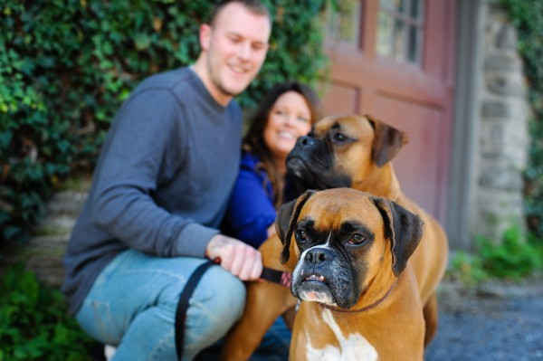 © Origin Photo | Daily Dog Tag | Boxers, Lifestyle-Pet-Photography