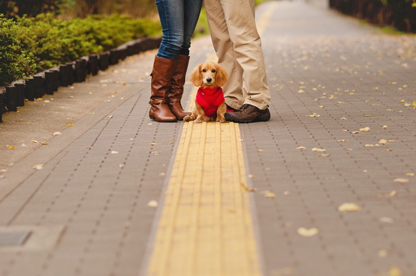 © Oeil Photography | including dog in engagement pictures