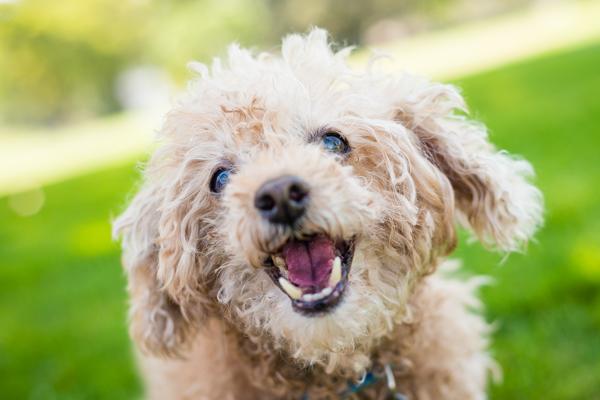 © Westway Studio | Daily Dog Tag | Adoptable-senior-dog-Lionel's-Legacy