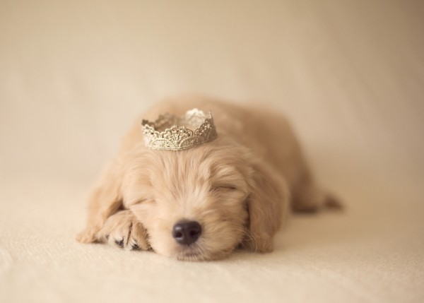 © Marci Yochum Photography | Daily Dog Tag | Sleeping-princess-pup