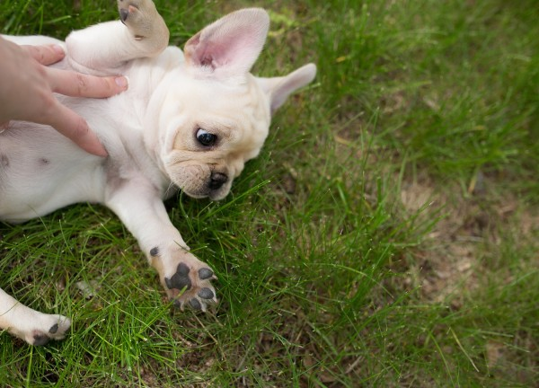 © Angelina Faye Photography | Daily Dog Tag | Minneapolis-pet-lifestyle-photography, puppy-love