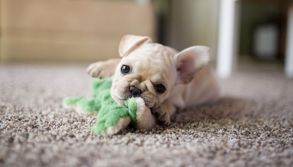 © Angelina Faye Photography | Daily Dog Tag | Minneapolis-puppy-lifestyle-photographer