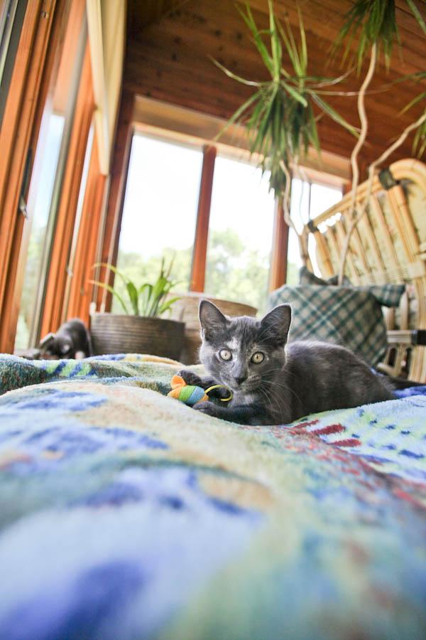 tarra kitten