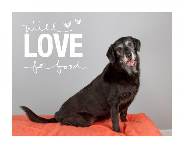 The Old Dog House:  Adoptable Senior Dogs