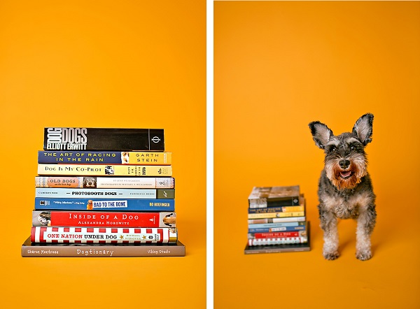 © April Ziegler Photography | Daily Dog Tag | Back-to-School-Schnauzer, great-dog-books