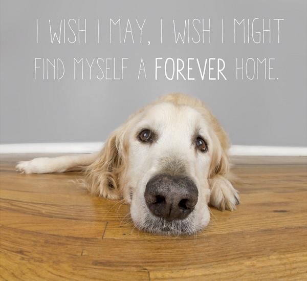 © City Dog Photography | Adoptable-senior-from-The-Old-Dog-House-Jacksonsville, FL
