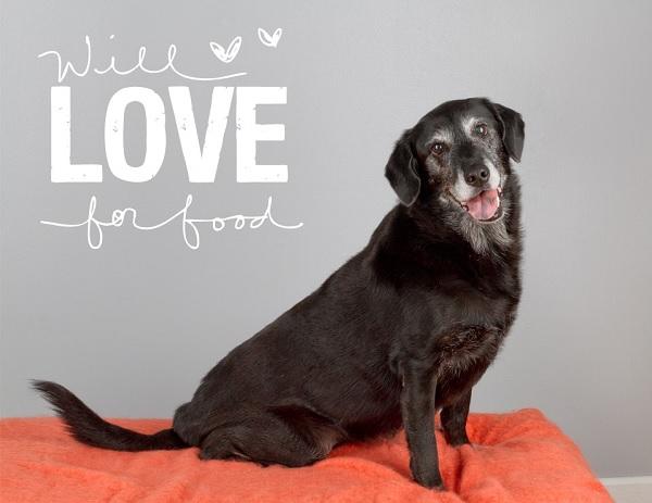 © City Dog Photography | Adoptable-senior-Black-Labrador-mix-from-The-Old-Dog-House-Jacksonsville,