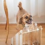 Tractor Supply Co.  DIY Dog Treat Dispenser by the Daily Dog Tag