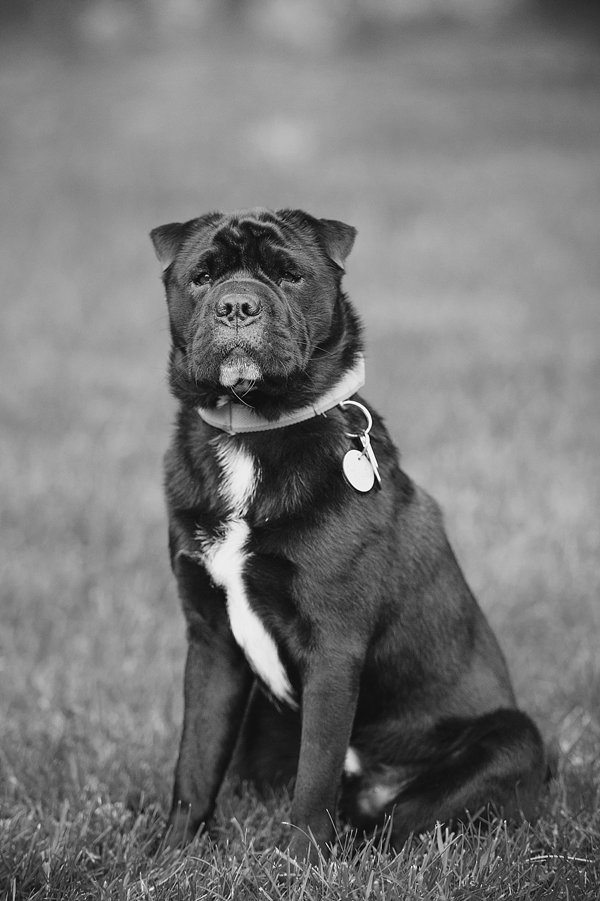 © Jenny Karlsson Photography | Daily Dog Tag | handsome-therapy-dog, lifestyle-dog-photography