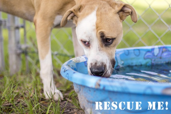 © Pavlina Sanborn Photography   Rescue Hank From Clay County Animal Care & Control