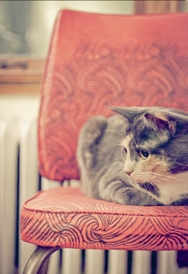 © Chocolate Moose Images | Daily Dog Tag | lifestyle-cat-portraits