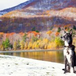 autumn splendor and dog