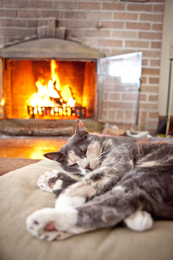 © Chocolate Moose Images | Daily Dog Tag | on-location-cat-photography, cat-sleeping-in-front-of-fire
